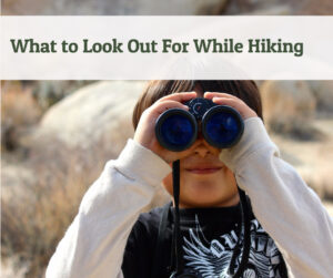 What to Look Out For While Hiking